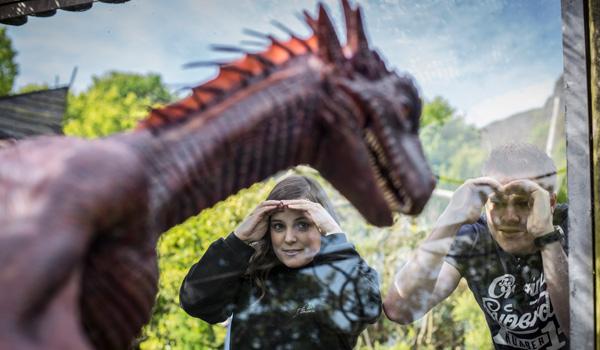 Dragon in Belfast Zoo